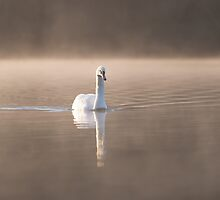 Swan on the Lake by Carl Revell