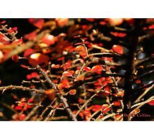 Autumn Glow Photographic Print