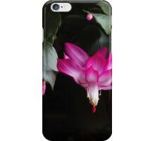 Christmas Cactus November 2014 2 iPhone Case/Skin