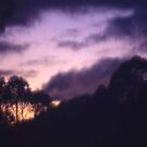 Photograph : Purple Haze by Roz McQuillan