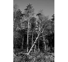 Falling Photographic Print
