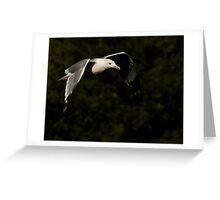 California Gull-Vivian Park-Provo Canyon Greeting Card