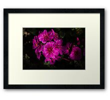 Shocking Pink and Fuchsia - a Vivid Succulent Bouquet Framed Print
