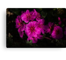 Shocking Pink and Fuchsia - a Vivid Succulent Bouquet Canvas Print