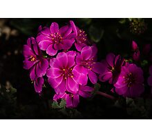 Shocking Pink and Fuchsia - a Vivid Succulent Bouquet Photographic Print