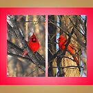 "Cardinals in a ""Crisp"" Winter Morning (framed for wall art/prints) by TerriRiver"