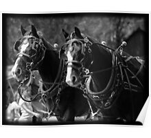 Horses Pulling Hearse Poster