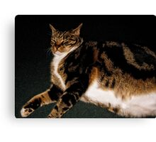 What a smug cat!  Canvas Print