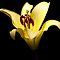 Florals Dark Background But Light on the Flower