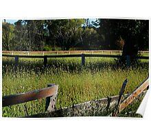 Overgrown paddock Poster