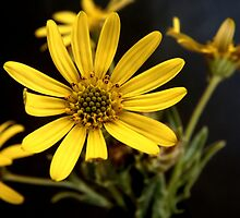 Beauty in Unexpected Places by Martie Venter