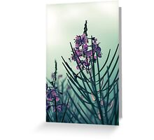 Atlantic Pink Wildflowers Chamerion Augustifolium Fireweed Greeting Card