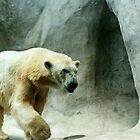 Polar Bear by MissMarf