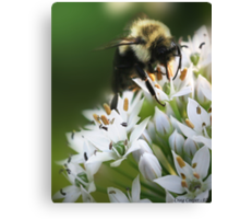 Bumble Bee III Canvas Print