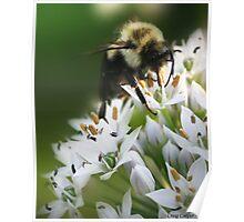 Bumble Bee III Poster