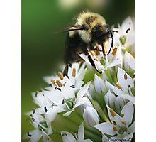 Bumble Bee III Photographic Print