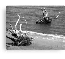 Erosion on Poet's Beach Canvas Print