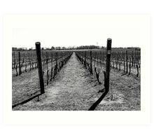 Newport Vineyard Art Print