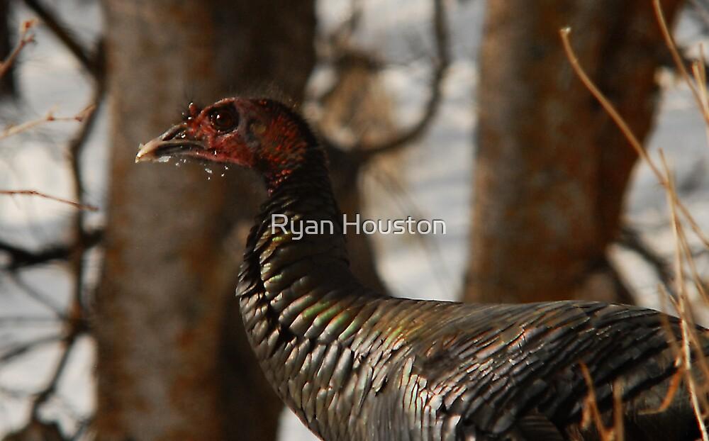 Wild Turkey Close Quarters by Ryan Houston