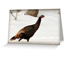 Wild Turkey After Snowstorm Greeting Card
