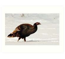 Wild Turkey in Snow Art Print
