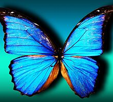 Blue Butterfly by augustinet