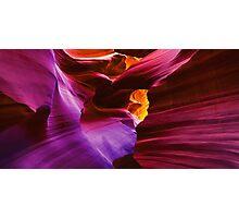 Amaranthine Embrace Photographic Print