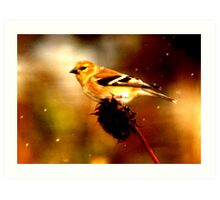 Songbird in Snowstorm Art Print