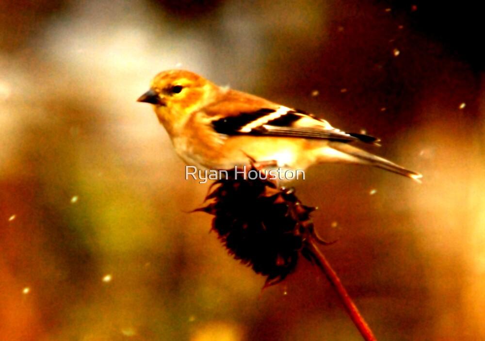Songbird in Snowstorm by Ryan Houston
