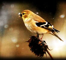 American Goldfinch Watercolor by Ryan Houston