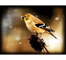 American Goldfinch Watercolor Photographic Print