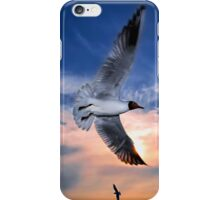 Black-Headed Gulls at Sunset iPhone Case/Skin