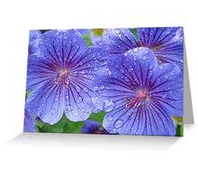 Geranium Magnificum Greeting Card