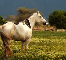 Horses by Ryan Houston