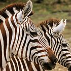 Double Zebra by Ismail Basymeleh
