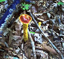Mushroom 2 by Allen Carr