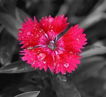 Flower grey by Kathrine