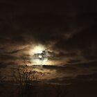 December Moons by Selena Chaplin
