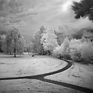 Follow the Path by Annette Blattman
