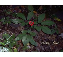 Hillbilly Gold Photographic Print