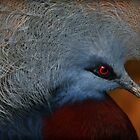 The Common Crowned Pigeon by Bobby McLeod