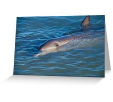Dolphins Of Monkey Mia Greeting Card
