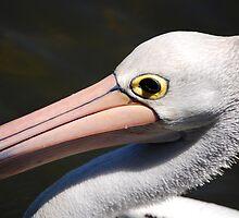 pelican by Ian Robertson