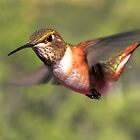 Another Hummer Zipping By by Ken  Aitchison