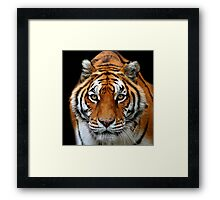 Fixed Stare Framed Print