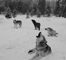 Winter Wolf Pack by kiddruba