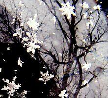 Snowflake  by funkyfacestudio
