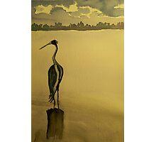 Lingering Heron Photographic Print