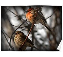 Lovebirds (House Finches) Poster