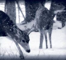 Blue Mule Deer by Ryan Houston